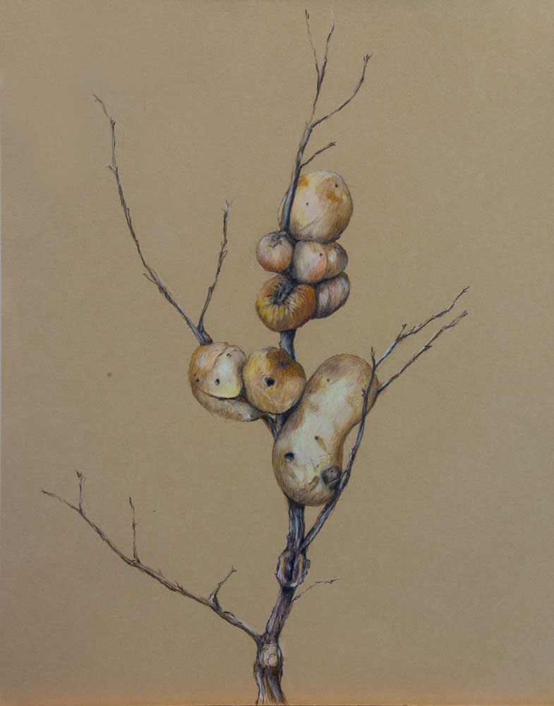 Oak Gall (Vertical) - 3
